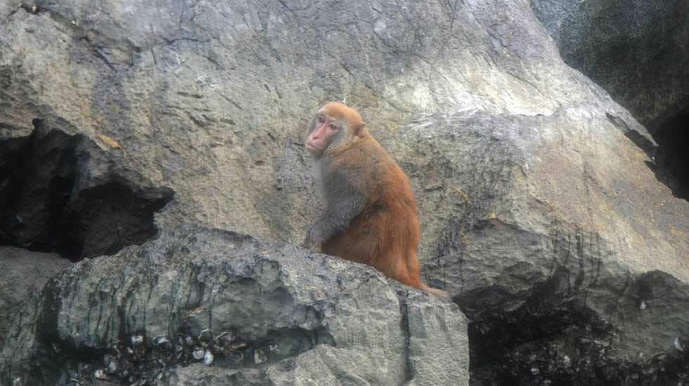 Affe auf einem Felsen