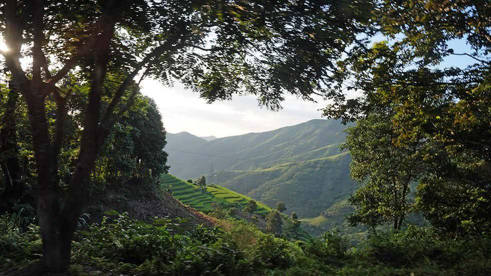 Ausblick über Reisfelder Vietnams