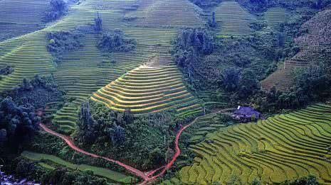 Weitere Reisfelder