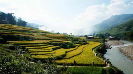 Reisfelder bei Sapa