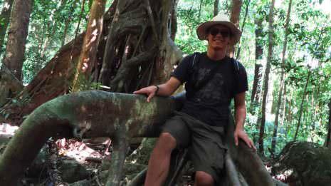 Großer Baum im Dschungel