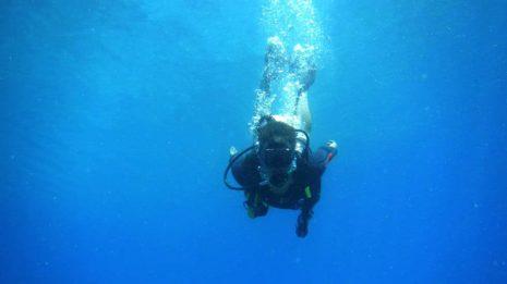 Great Barrier Reef: Von Schildkröten, Delfinen und Haien