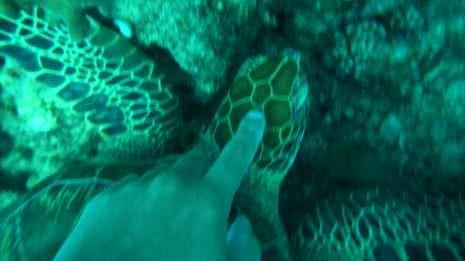 Ich streichle eine Schildkröte