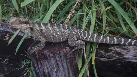 Krokodil am Wegesrand