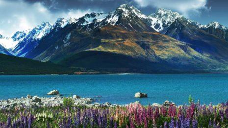 Christchurch, Dunedin und viel Einsamkeit
