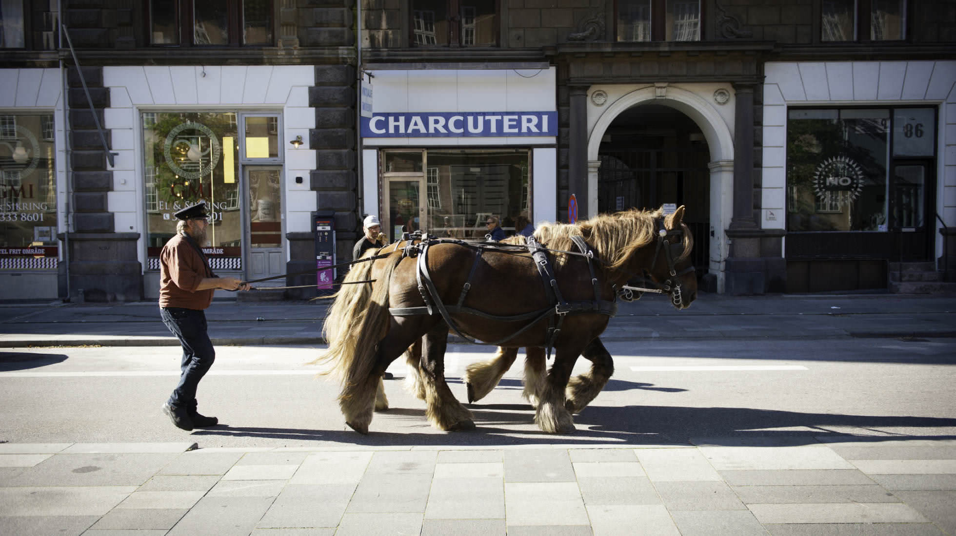 Pferde mitten in der Stadt