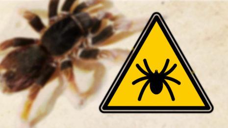 Spinnen, Quallen, Haie & Co: Wie giftig ist Australien?