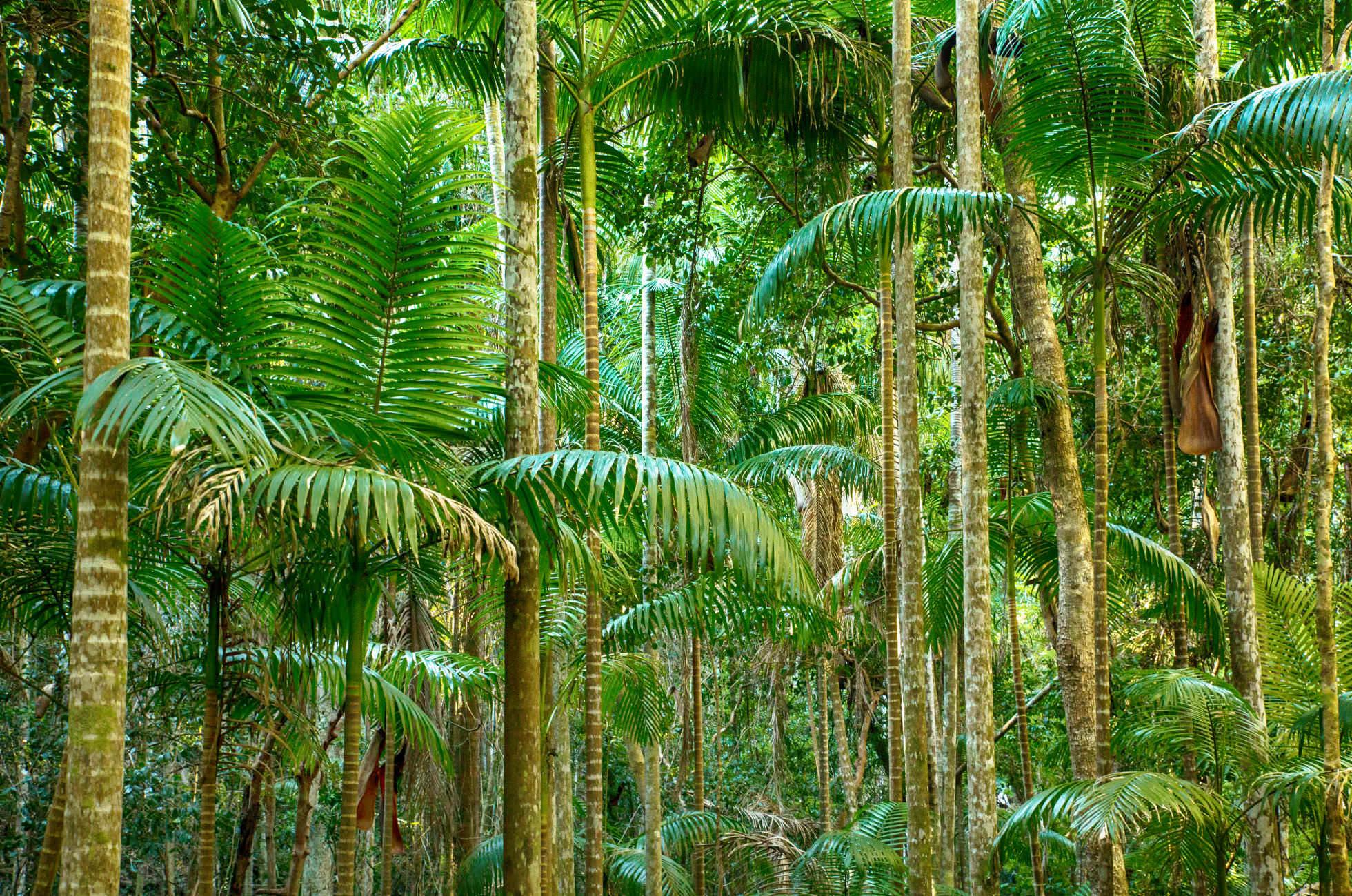 Dschungel Malaysia