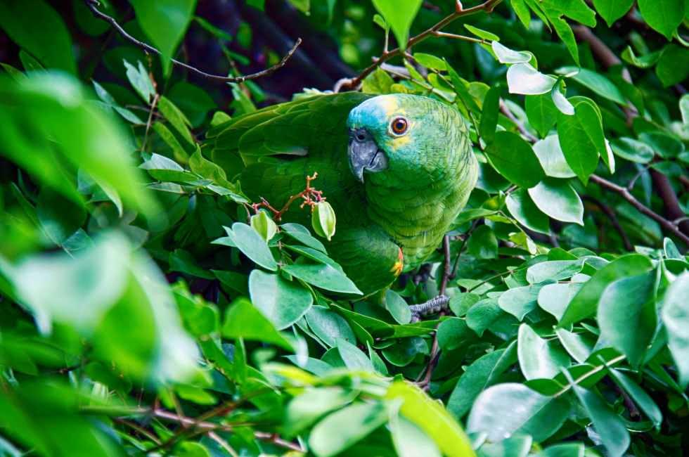 Vögel im Taman Negara