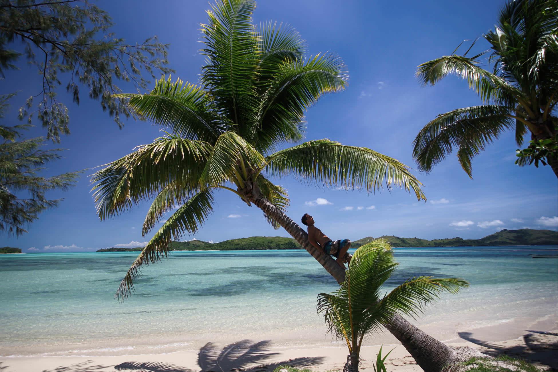 Fiji Palme Fidschi