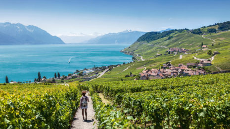 Weinfelder in Lavaux