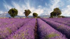 Reisetipps Frankreich