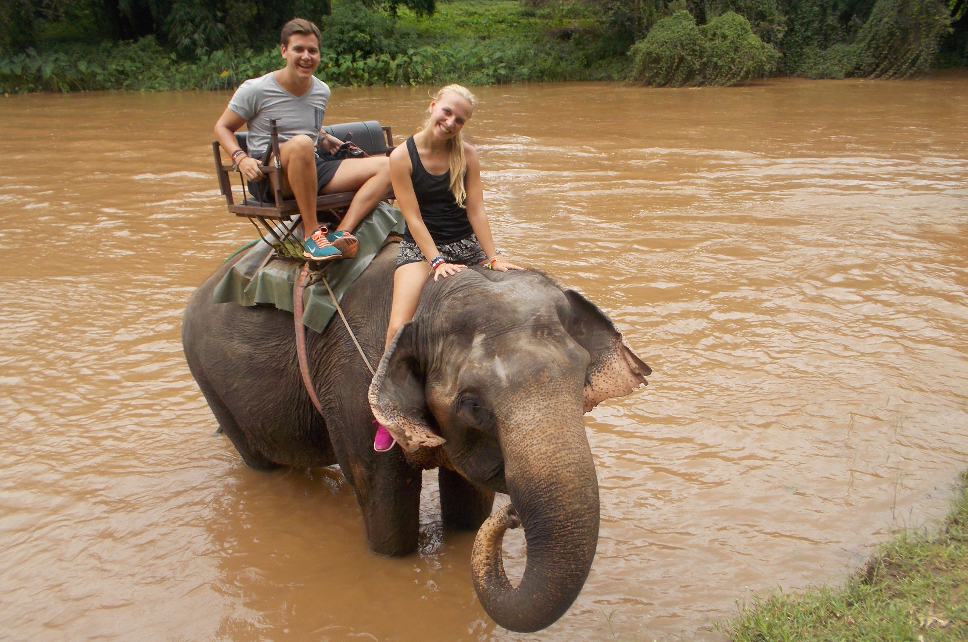 Elefant Thailand