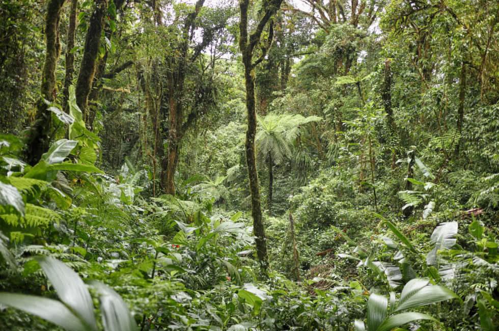 Cloud Forest Santa Elena