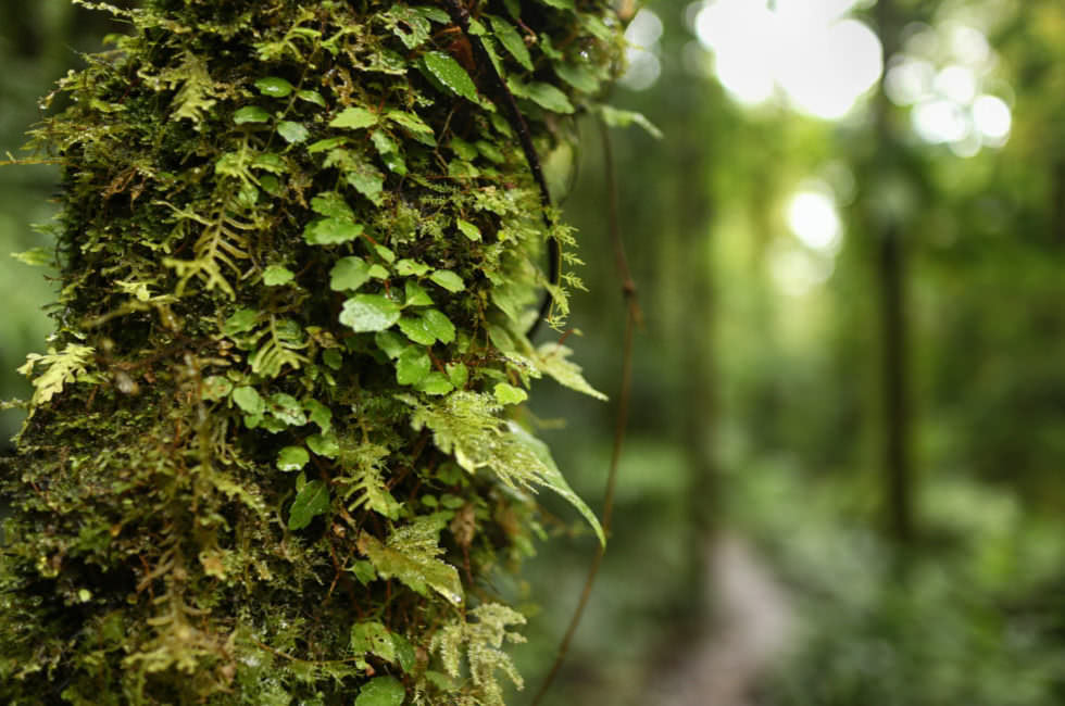 Cloud Forest Monteverde