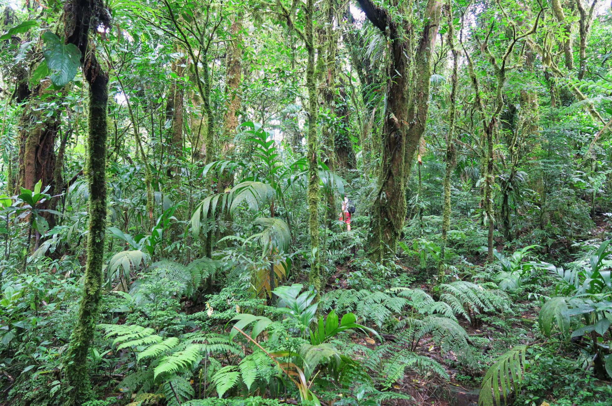 Wanderung Cloud Forest Monteverde