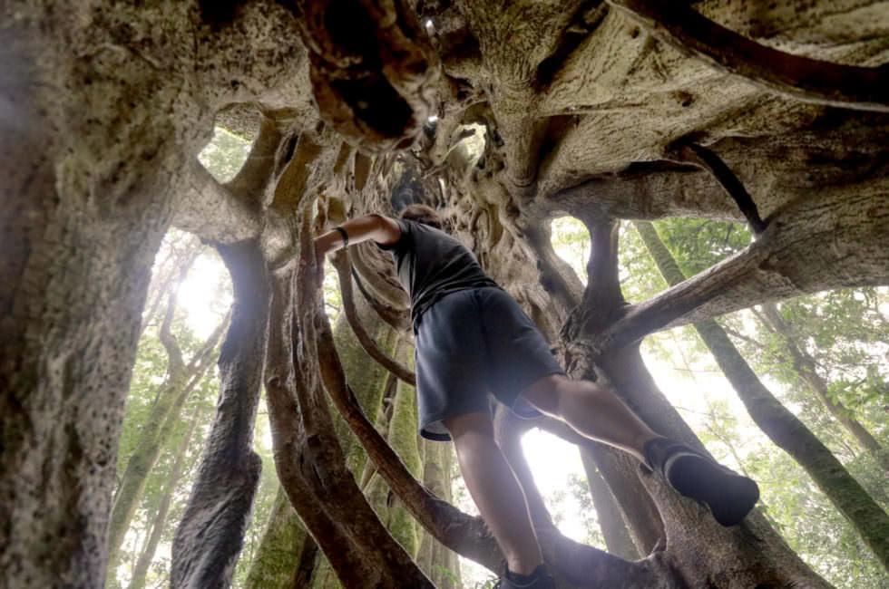 Bäume klettern