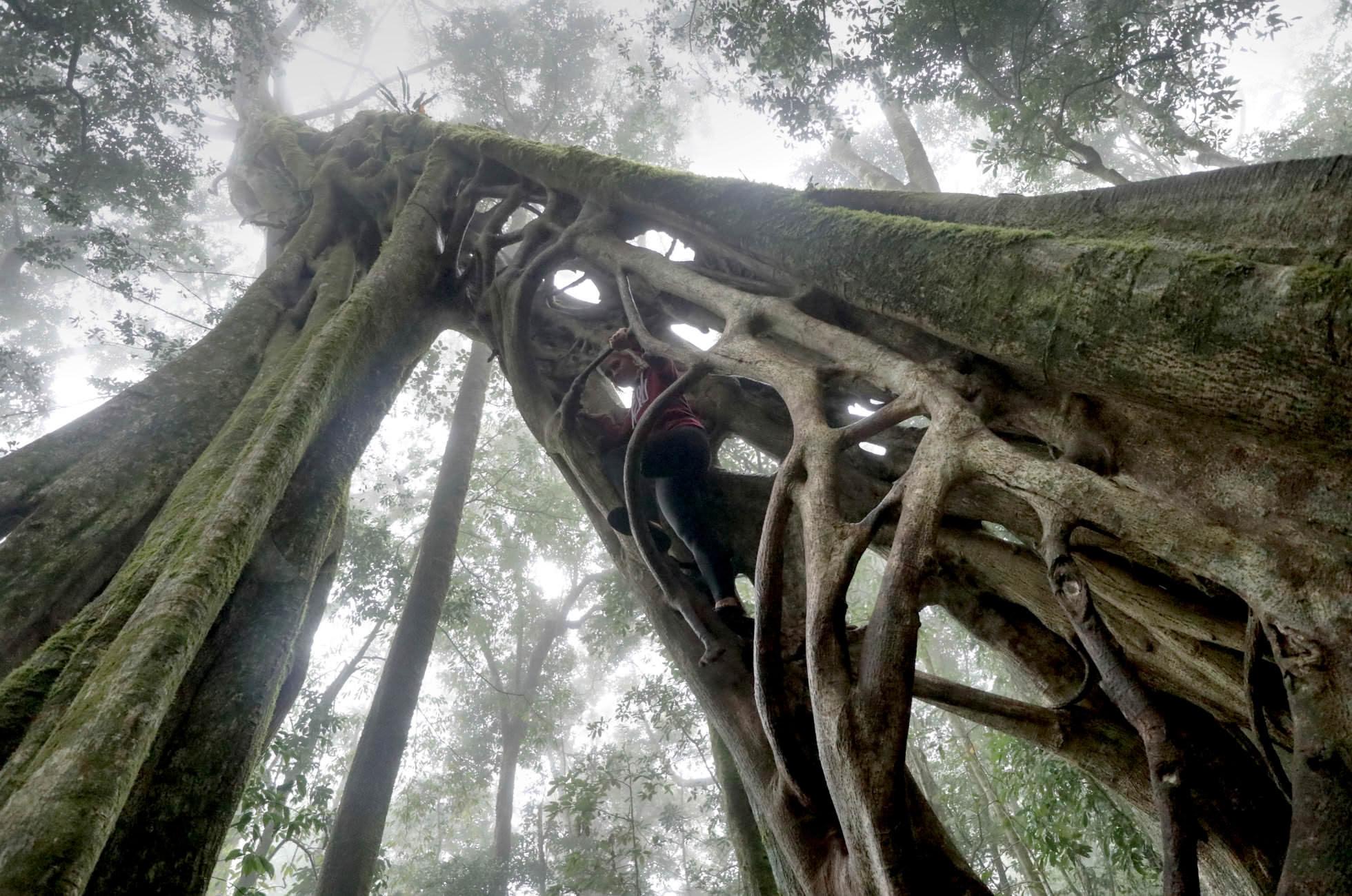 Klettern Monteverde