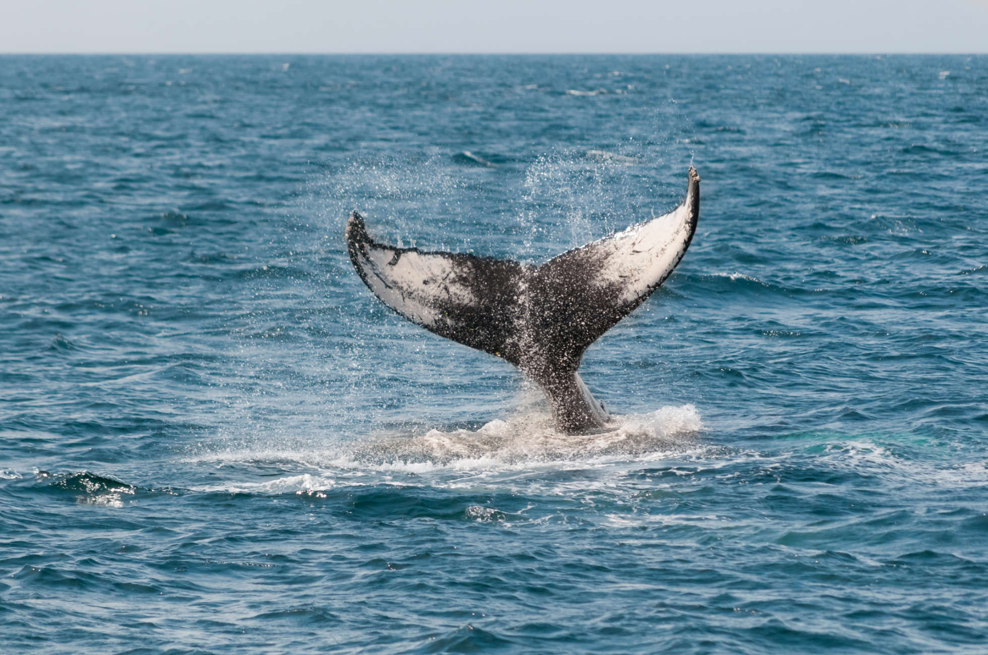 Sri Lanka Whale-Watching