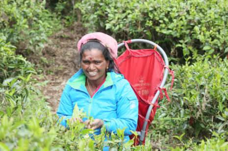 Pedros Teeplantage Nuwara Eliya