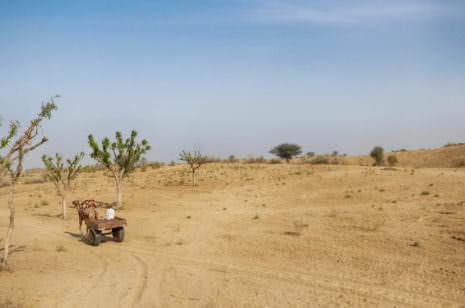 Thar Wüste