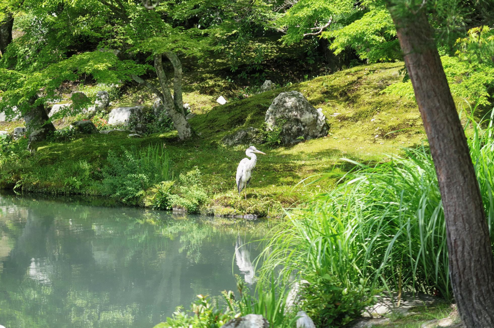 Kyoto Garten