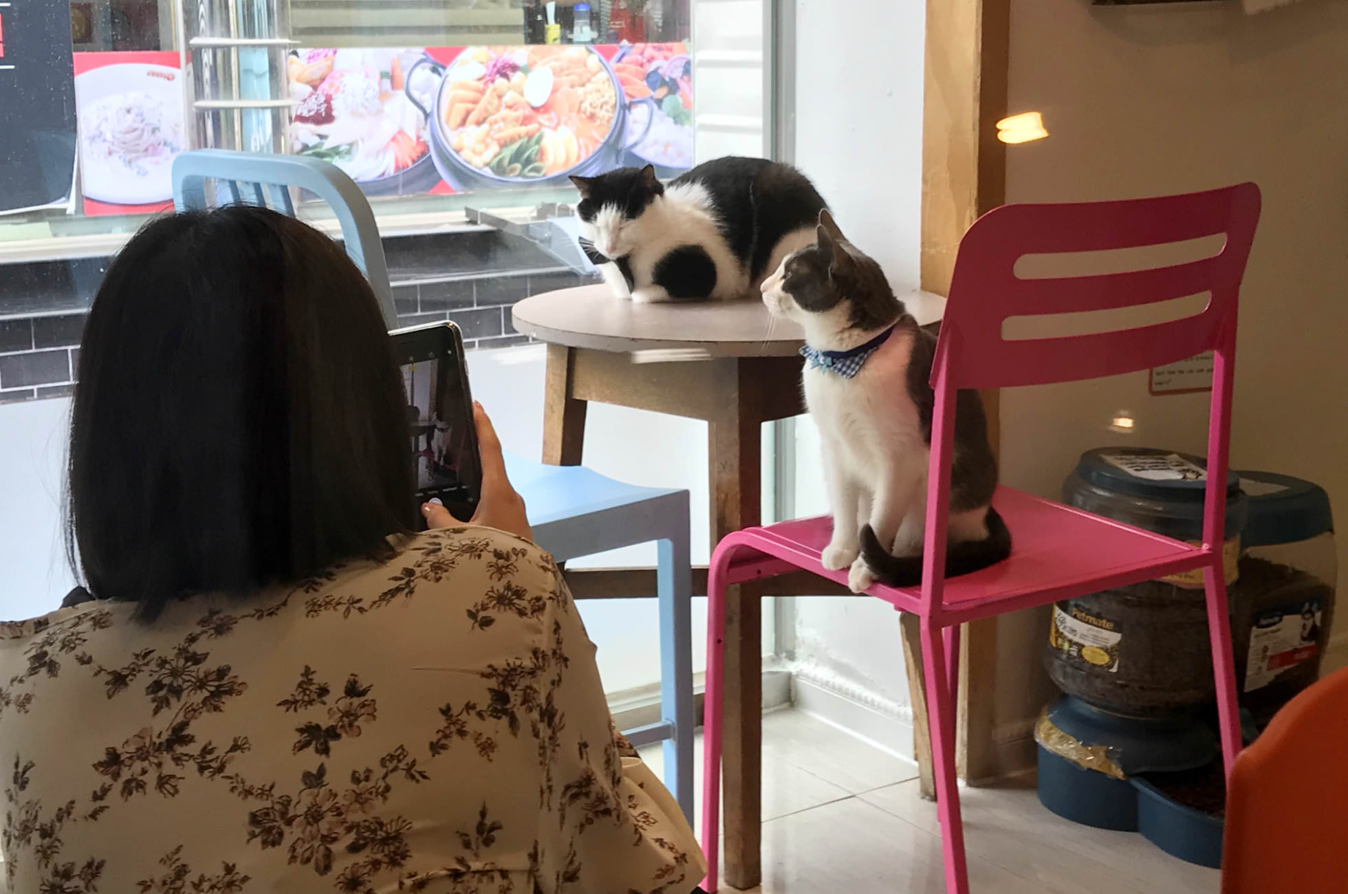 Katzen-Café Seoul