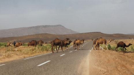 Roadtrip: Zwei Wochen mit dem Auto durch Marokko