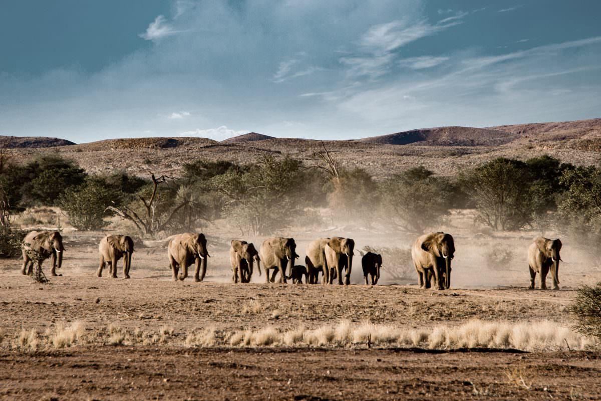 Der Etosha-Nationalpark: Namibias weite Wildnis