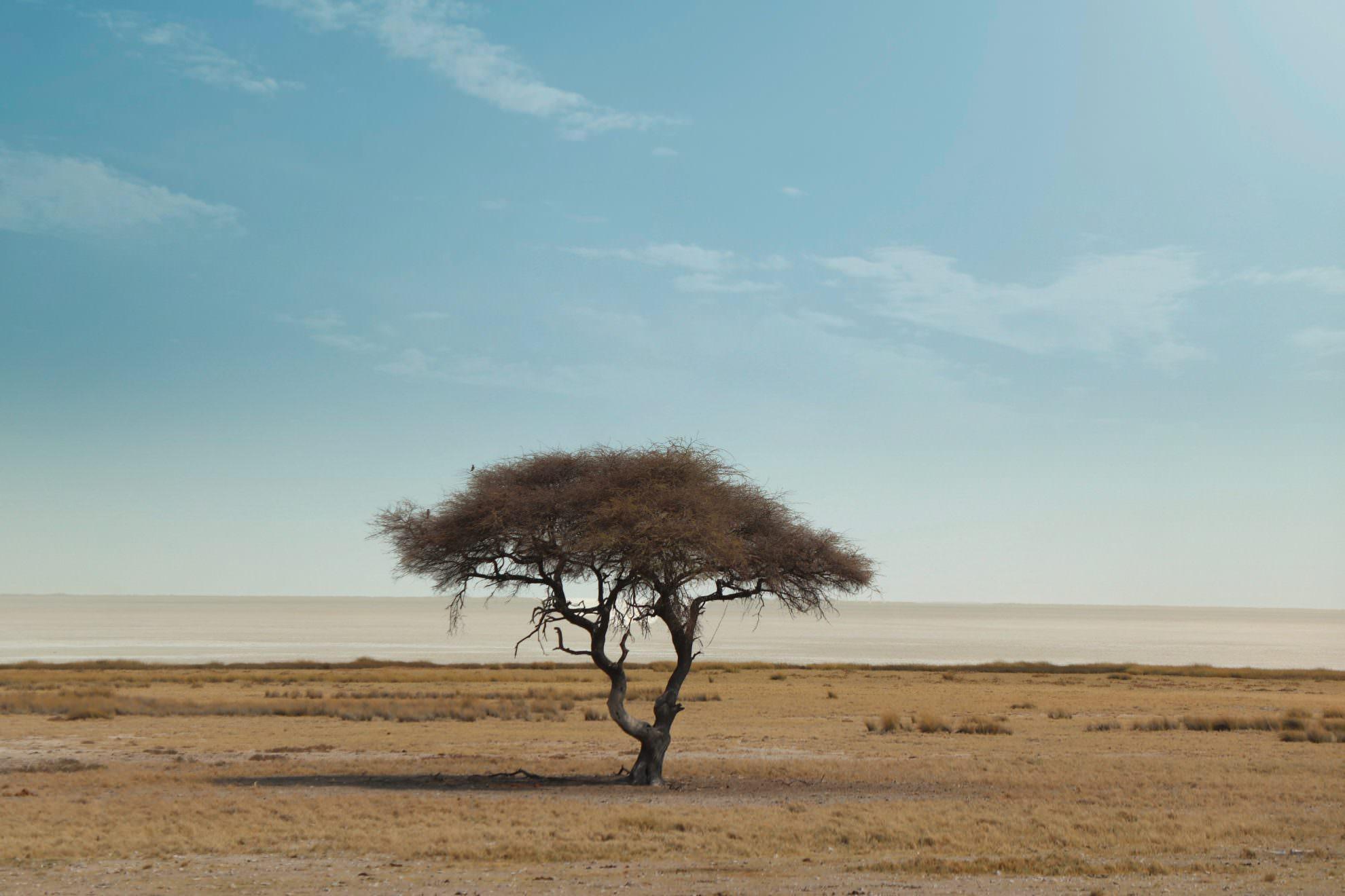 Etosha Pfanne Nationalpark Afrika
