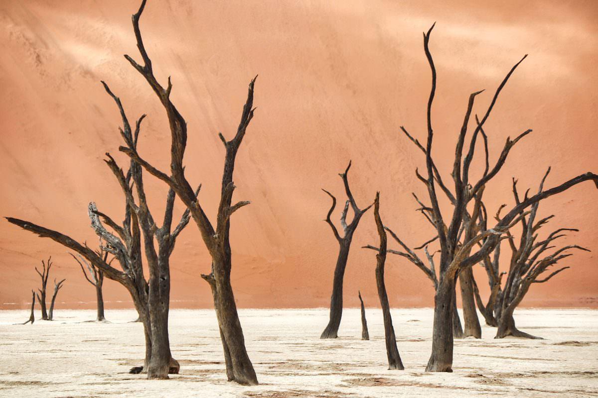 Namib: Die älteste Wüste der Welt