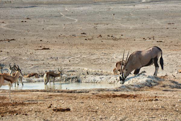 GAdventures vom Kap nach Namibia